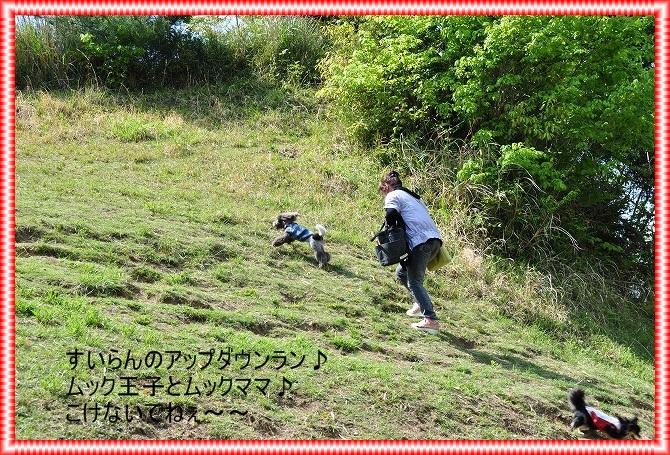 DSC_0054_20110507001311.jpg