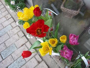 春ですね1103022