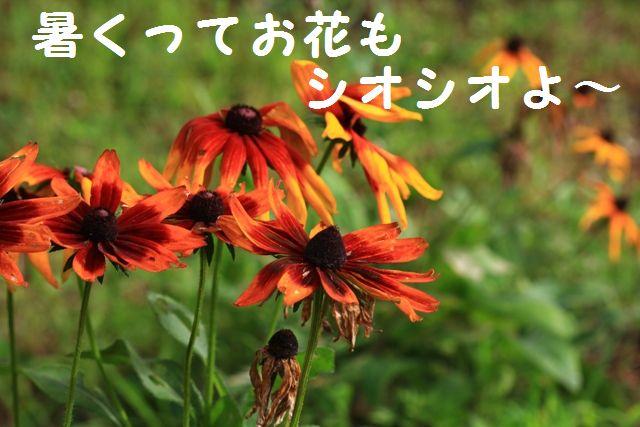 IMG_1514.jpg