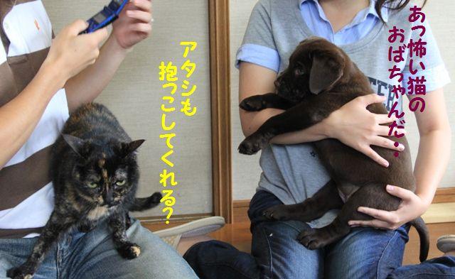 IMG_9497_20110712080402.jpg