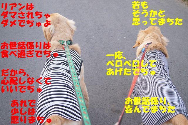 00005_20120412184805.jpg