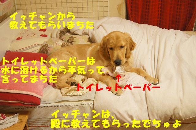 00006_20120403204634.jpg
