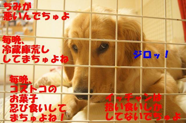 00008_20120407205738.jpg