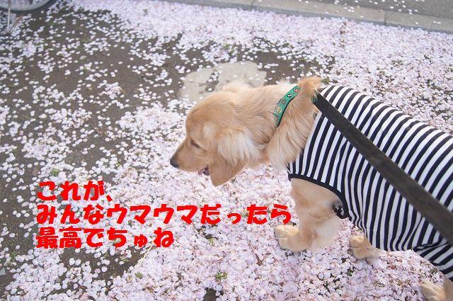00008_20120412184830.jpg