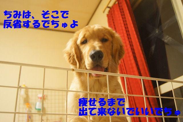 00009_20120407205737.jpg