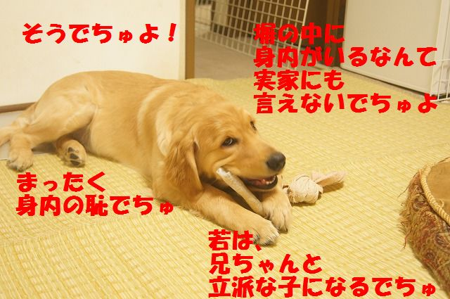 00010_20120407205736.jpg
