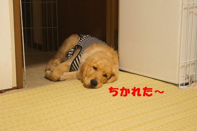 0011_20120327233739.jpg