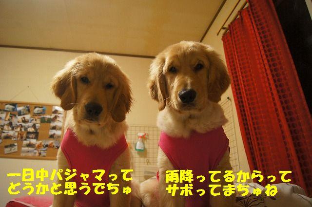 001_20120318201322.jpg