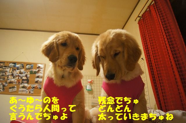 002_20120318201321.jpg