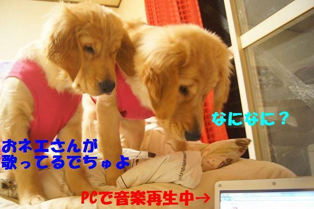 003_20120318201321.jpg