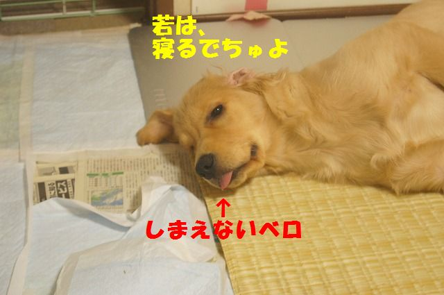 003_20120325204413.jpg