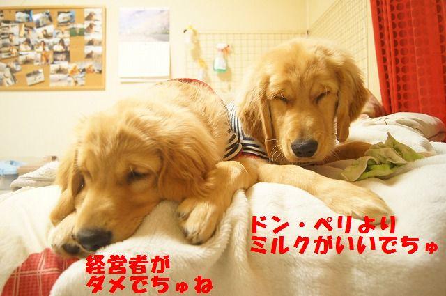 004_20120321000351.jpg