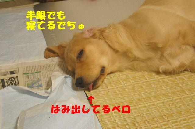 004_20120325204412.jpg