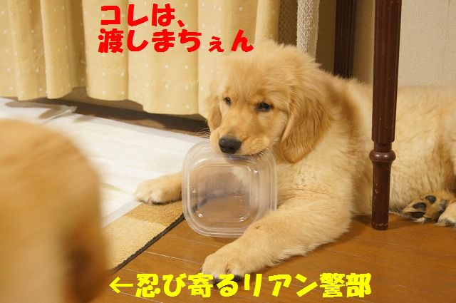 006_20120131225145.jpg