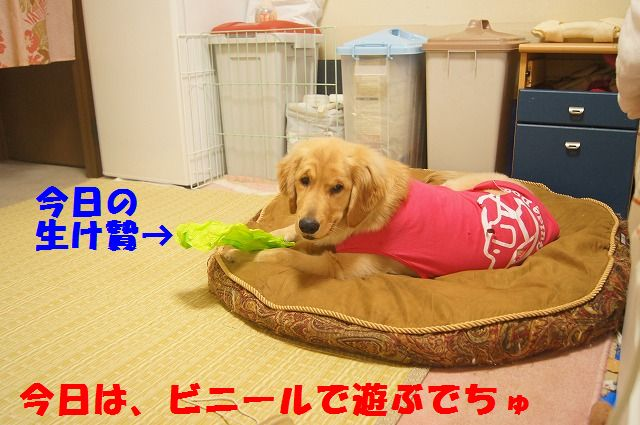 006_20120318201319.jpg