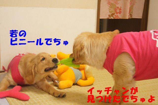 007_20120318201339.jpg