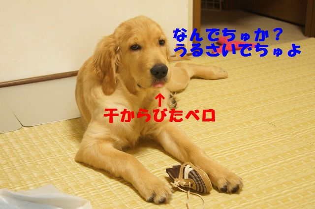 007_20120325204435.jpg