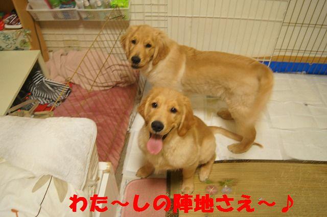 009_20120317221121.jpg