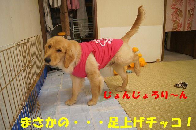 009_20120318201338.jpg