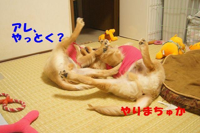 009_20120321000413.jpg