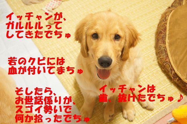 009_20120325204434.jpg