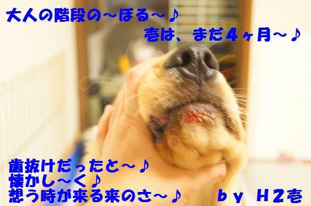 010_20120325204434.jpg