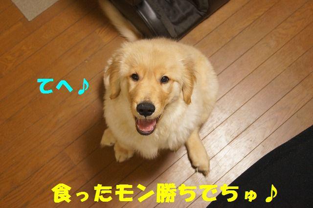 011_20120131225239.jpg