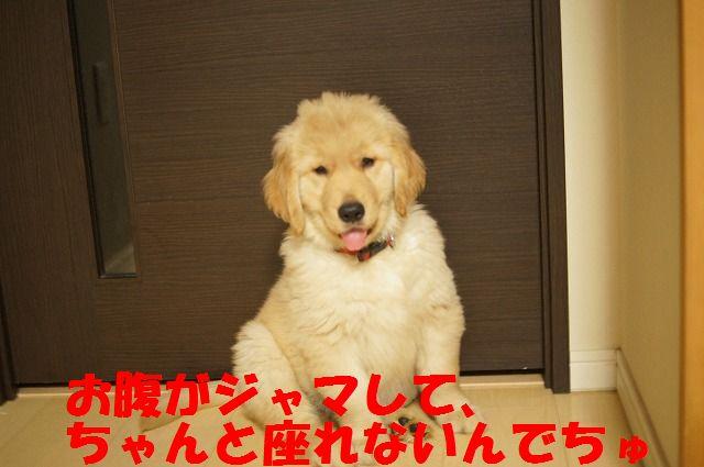 014_20120126223105.jpg
