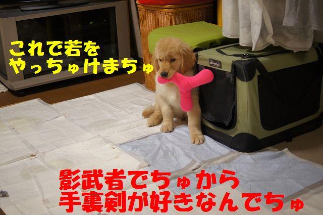 015_20120126223105.jpg