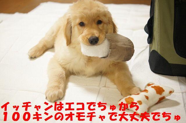 016_20120126223104.jpg