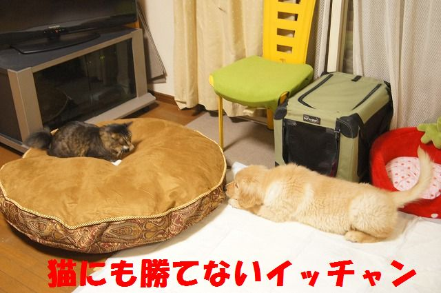 017_20120126223104.jpg