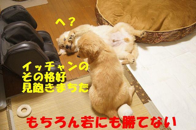 018_20120126223103.jpg