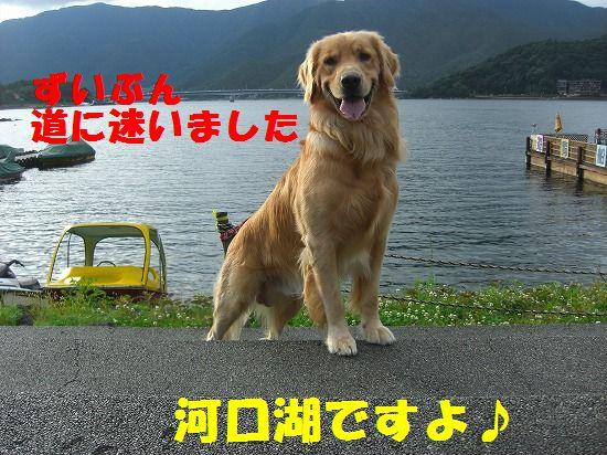072_20111223214832.jpg