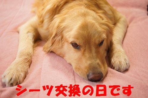 10_20111123224948.jpg