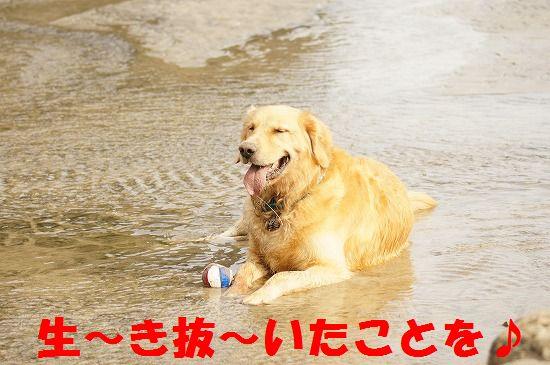 10_20111207193831.jpg