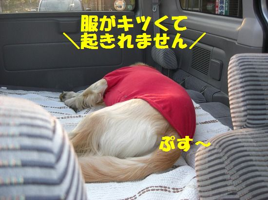 10_20111209203452.jpg