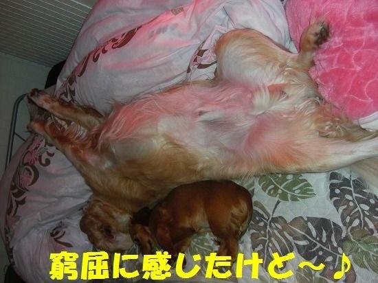 10_20111210205452.jpg