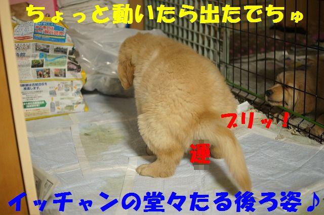 10_20120111204703.jpg