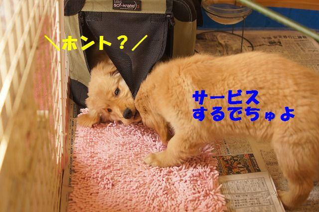 10_20120118203842.jpg