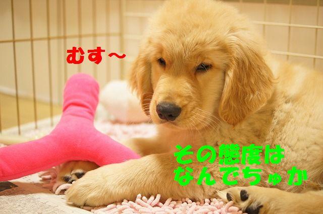 10_20120119222449.jpg