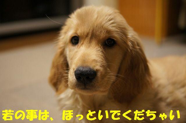 10_20120121224327.jpg