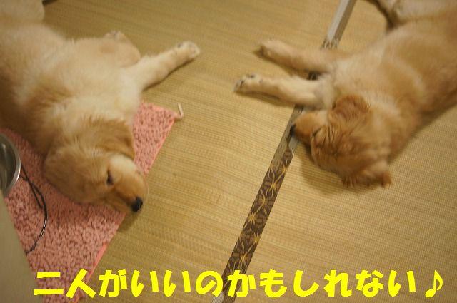 10_20120123221749.jpg