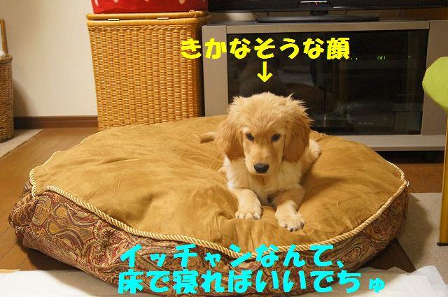 10_20120125214205.jpg