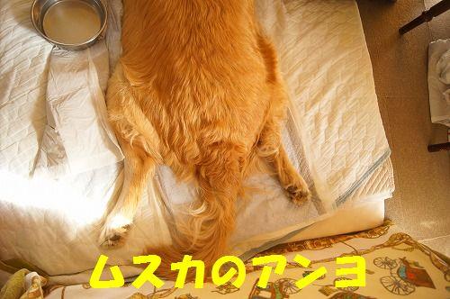 11_20111122234026.jpg