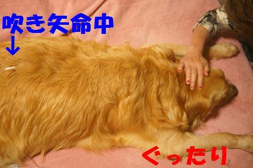 11_20111123224947.jpg