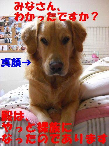 11_20111209203452.jpg