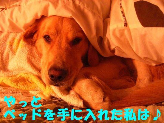 11_20111210205452.jpg