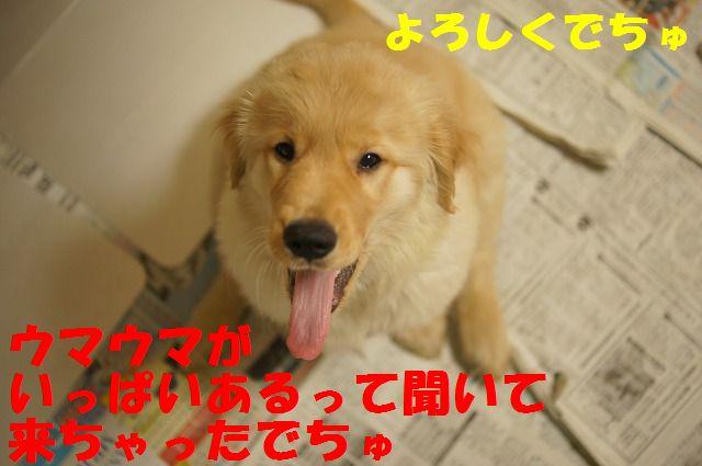 11_20120117221941.jpg