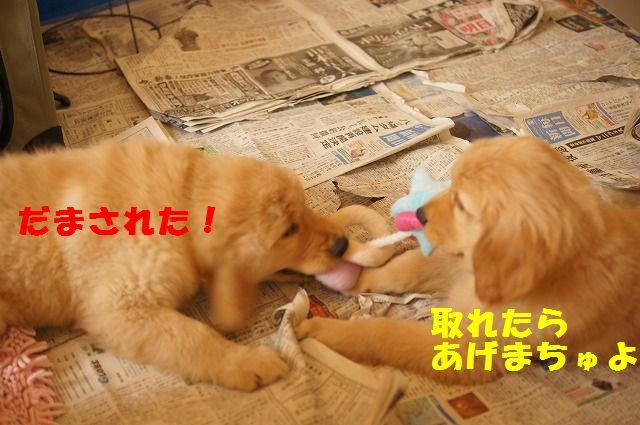 11_20120118203841.jpg