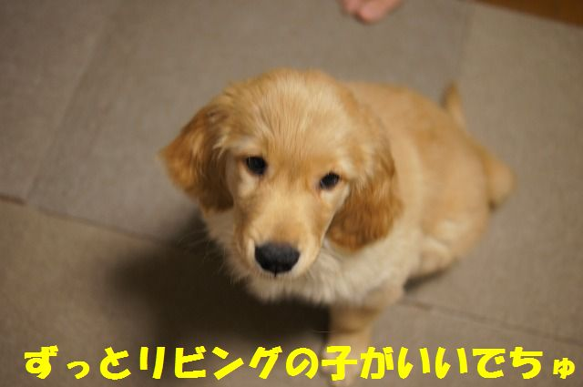 11_20120121224326.jpg